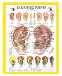 Ear Reflex Points Wall Chart by Terry Oleson, PhD